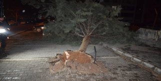 Malatya'da fırtına ağacı kökünden söktü